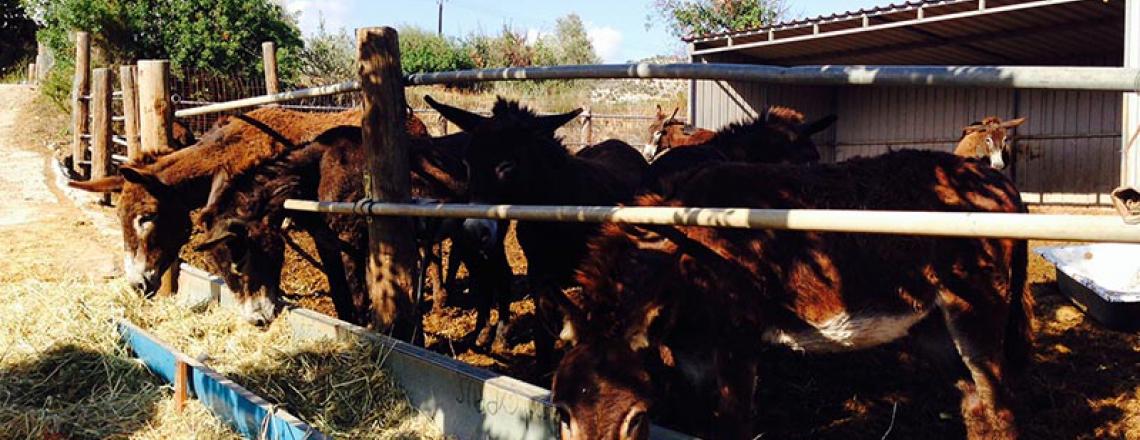 Dipotamos Donkey Farm, ослиная ферма «Дипотамос» в Ларнаке