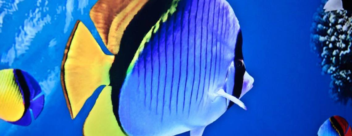 Protaras Ocean Aquarium, океанариум в Протарасе